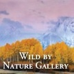 Wild by Nature Gallery